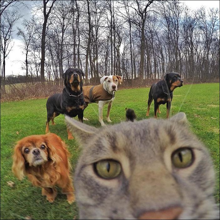 Селфи кошка Мэнни