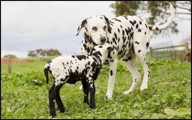 животные с похожей окраской