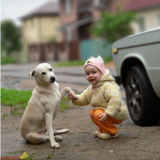 dog-and-child-02