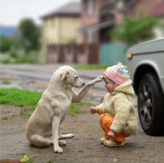 dog-and-child-04