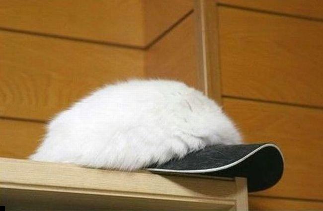 kepka-cat-01