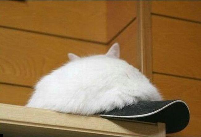 kepka-cat-02