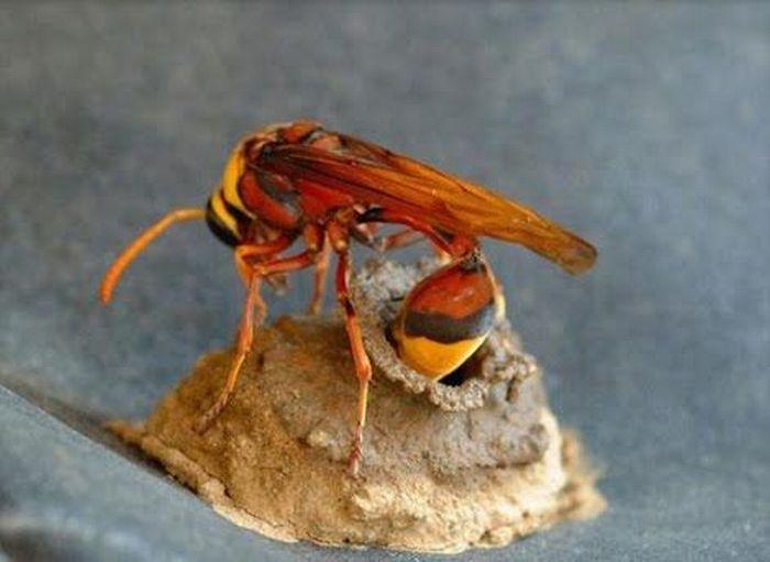 bee-house-04