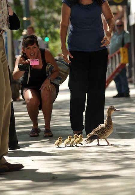 duck-rescue-09