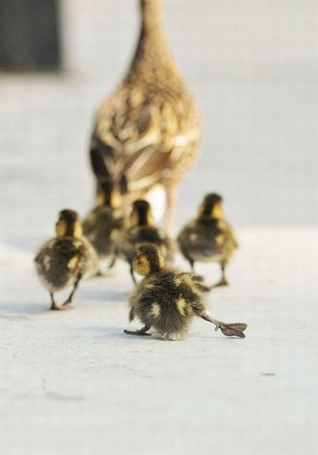 duck-rescue-12