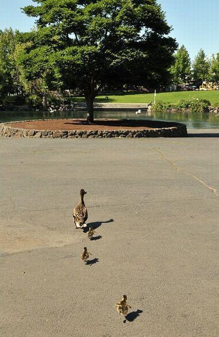 duck-rescue-14