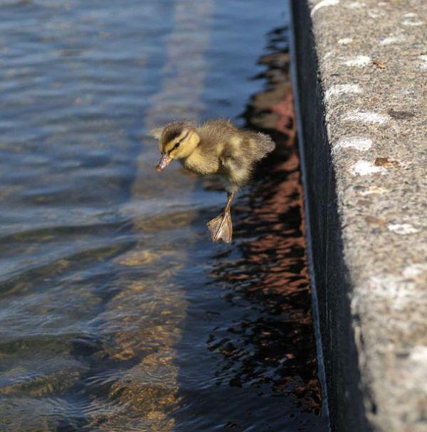 duck-rescue-16