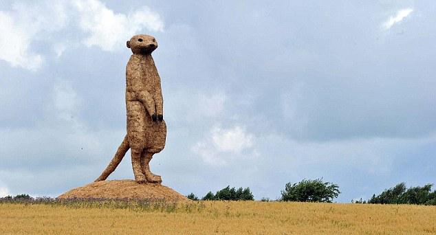meerkat-02