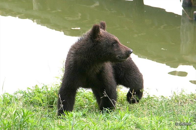 Забавные медвежата 16 фото