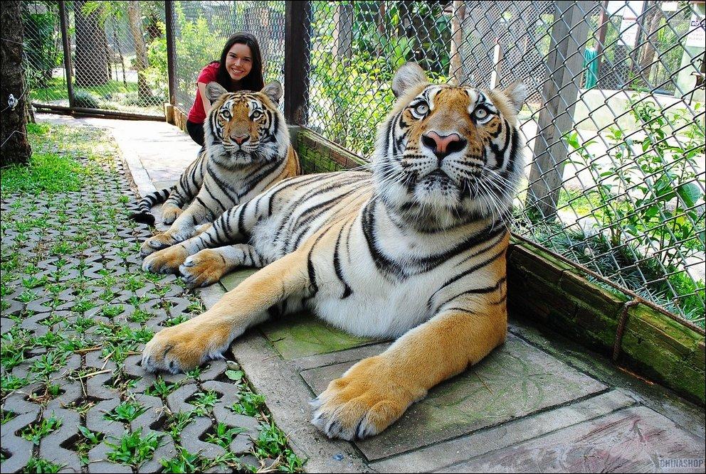 Большие кошки