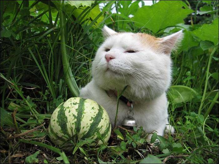 2008 год для тех кто родился в год кота:
