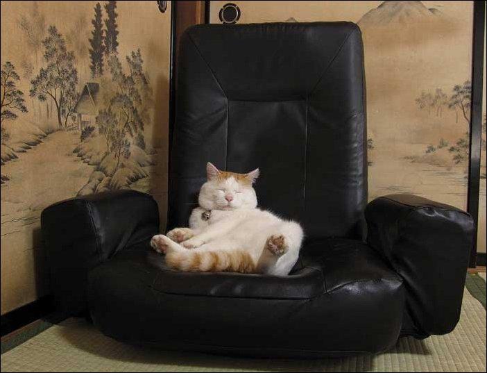 Самый расслабленный кот в мире
