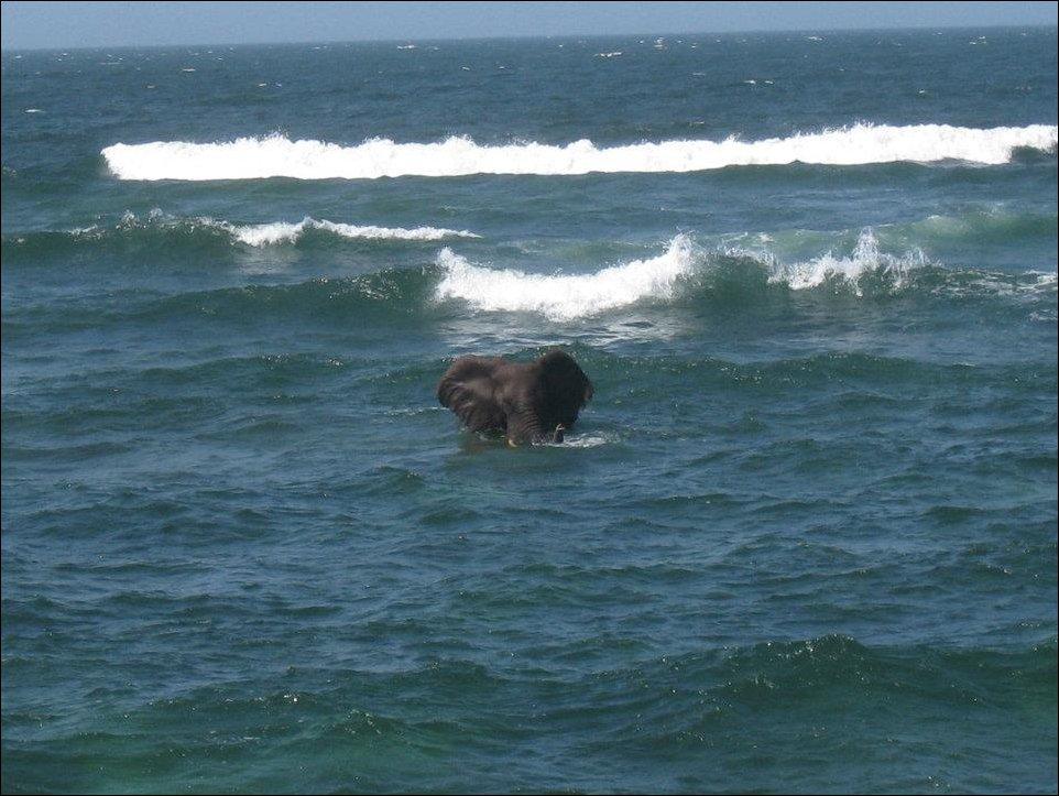 Слон решил искупаться