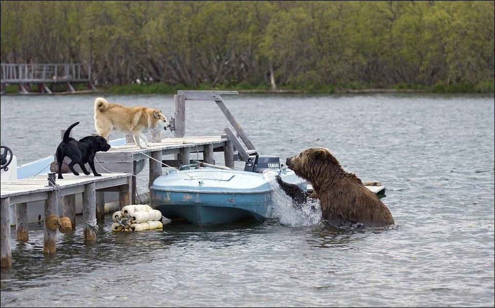 Голодный медведь