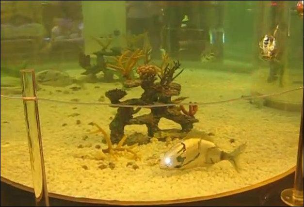 Аквариум с рыбами-роботами