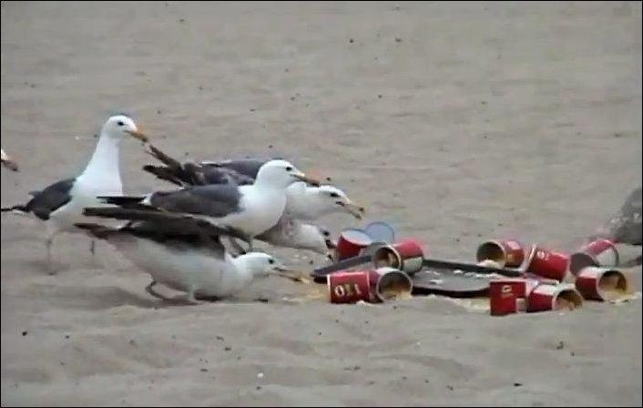 Розыгрыш с чайками и слабительным
