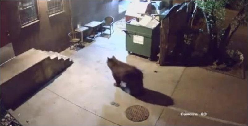 Медведь-мусорщик