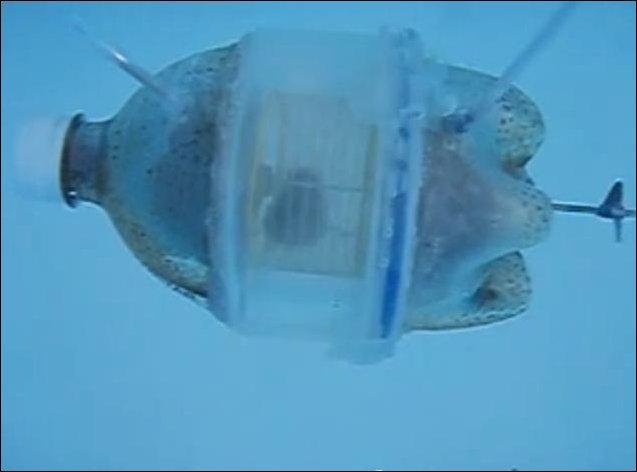 Хомяк в подводной лодке