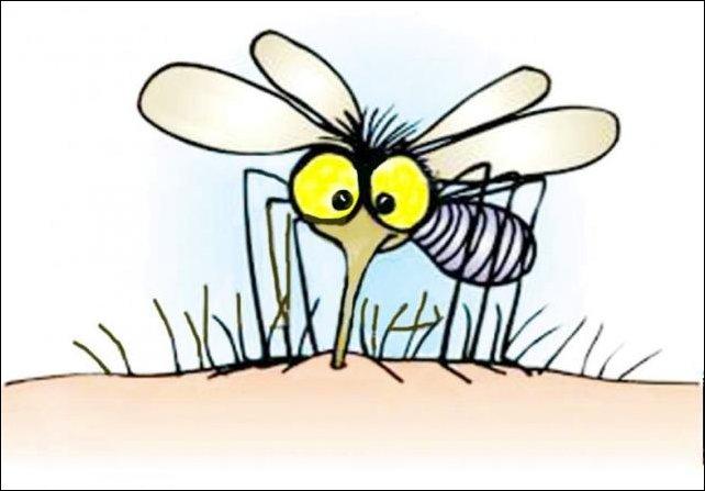 Как комар пьет кровь