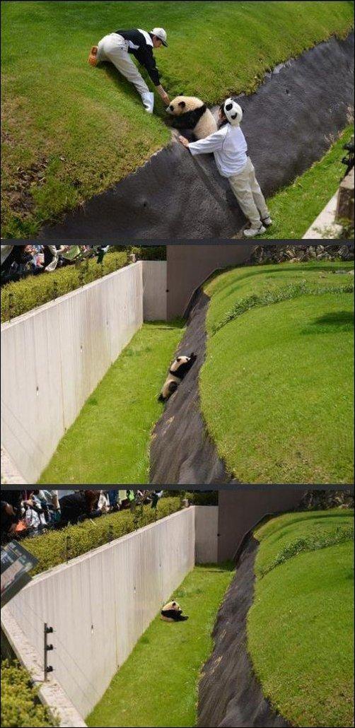 Рука помощи для панды