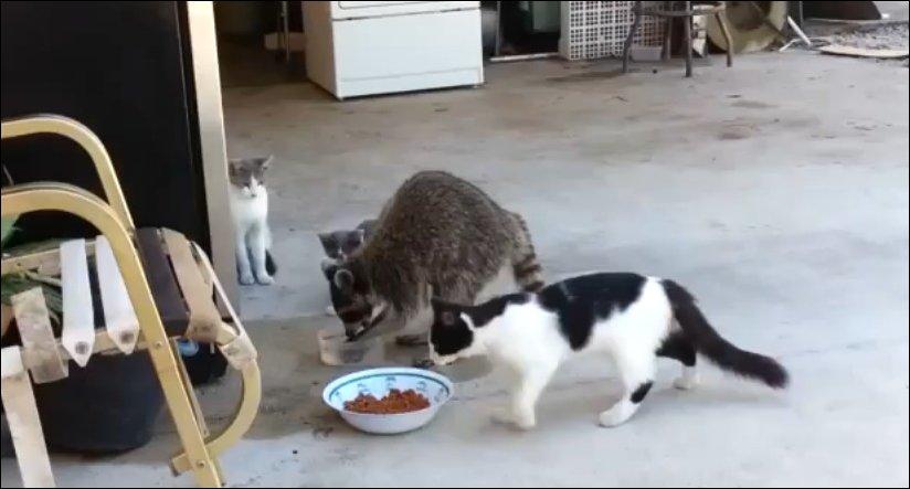 Мне нужна ваша еда и вода