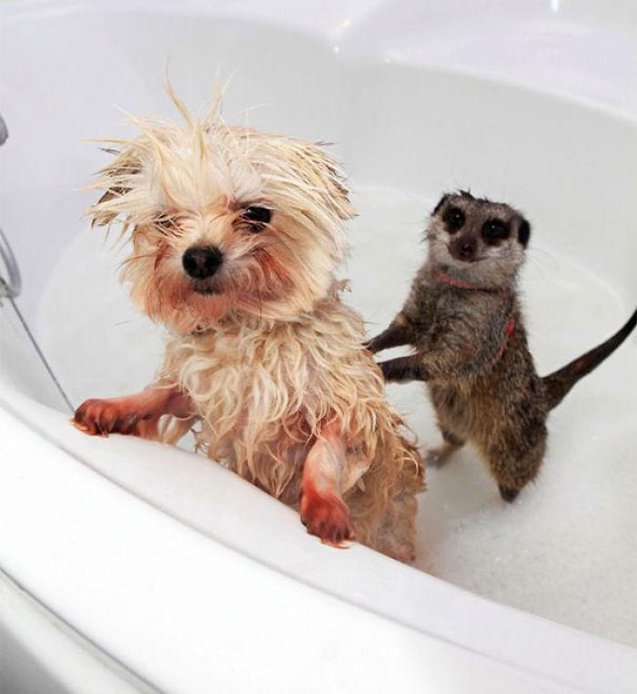 Животные принимают ванну