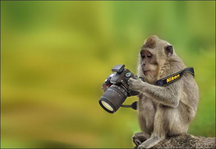 Животное и фотоаппарат