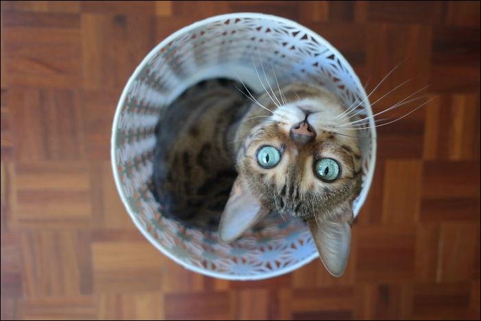 коты в коробке