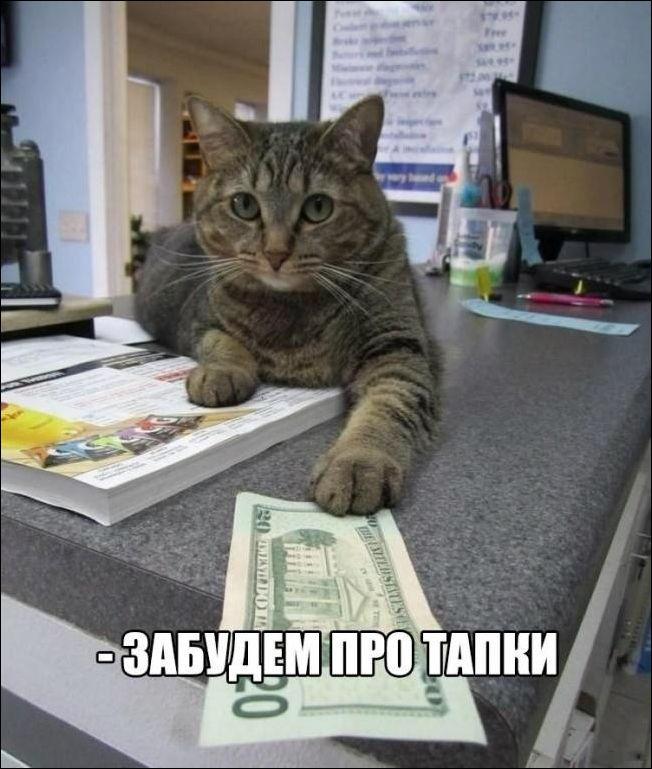 Картинки кот на горшке