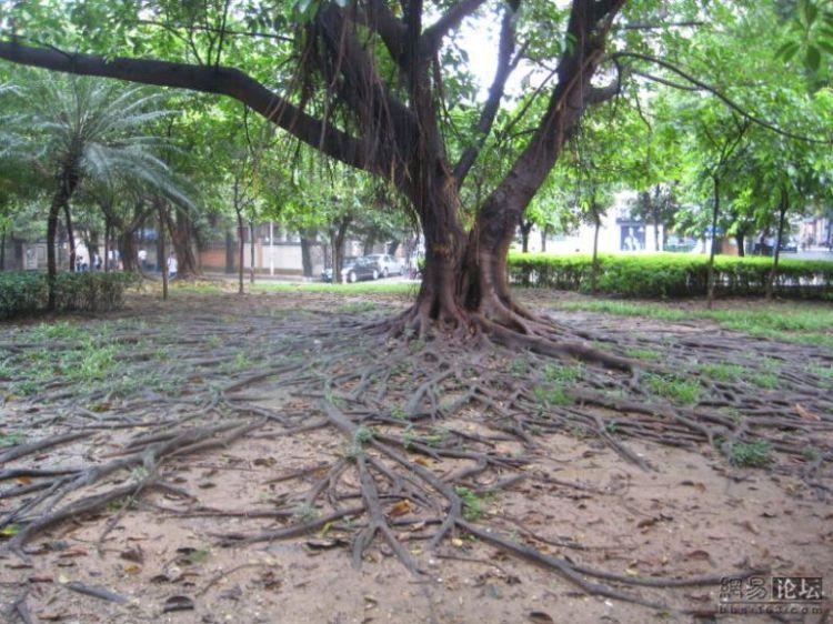 huge-roots-01