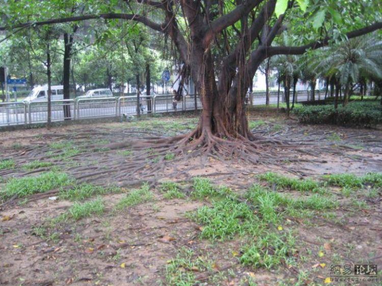 huge-roots-03