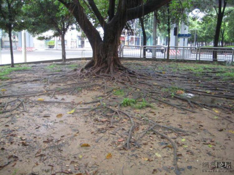 huge-roots-04