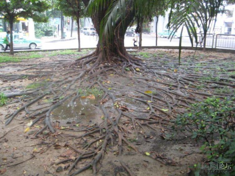 huge-roots-05