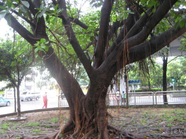 huge-roots-06