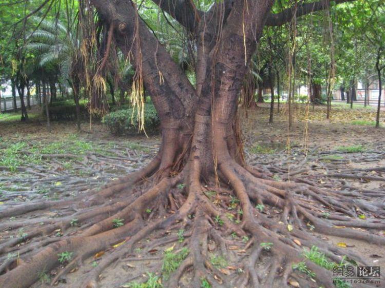huge-roots-07