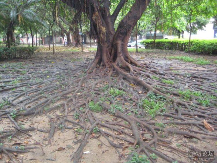 huge-roots-08