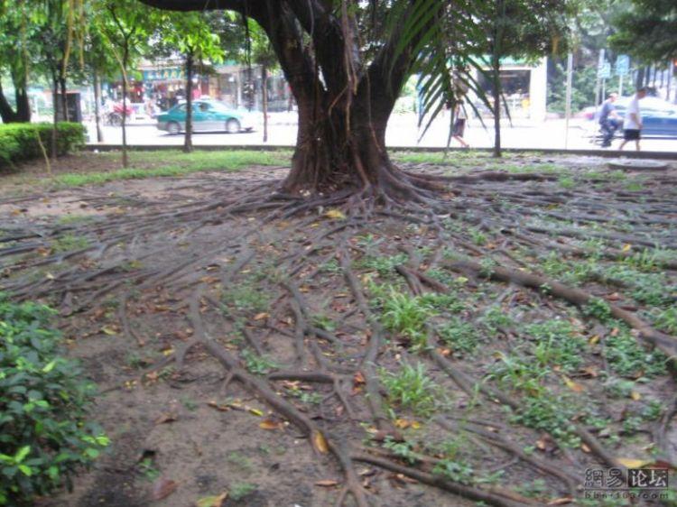 huge-roots-10