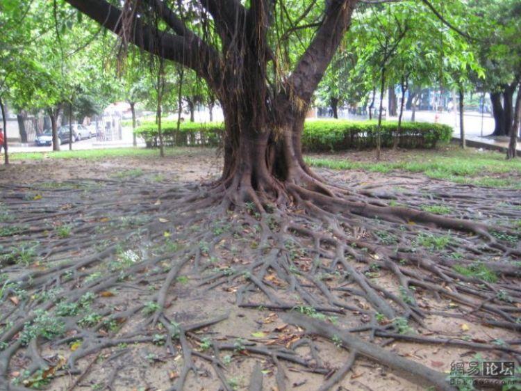 huge-roots-11