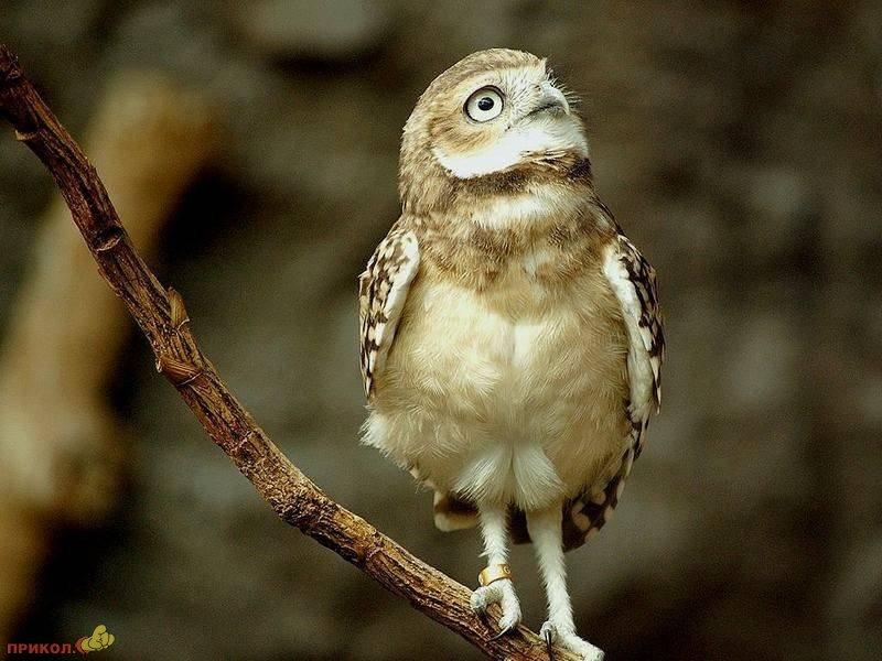 owl-12
