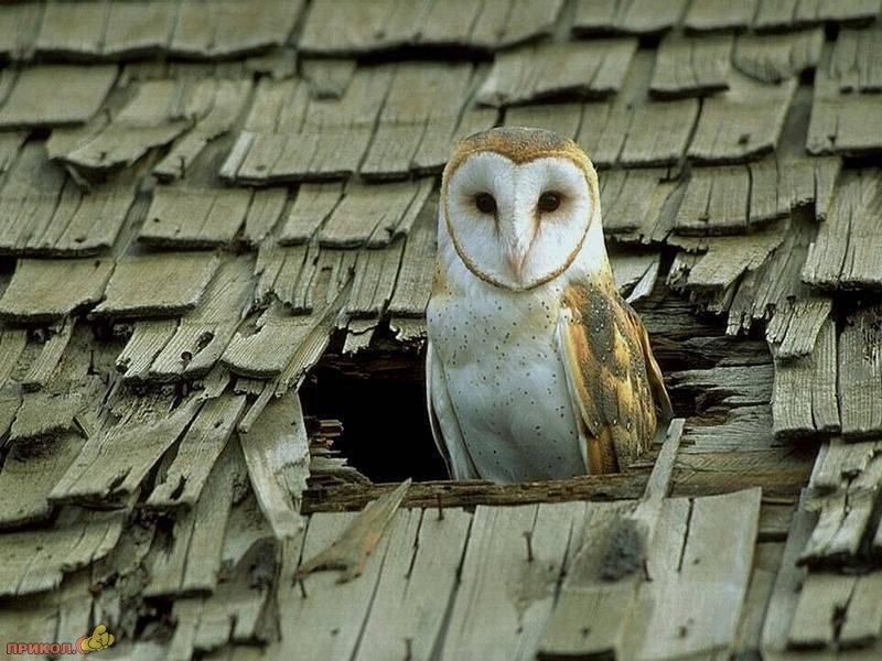 owl-22