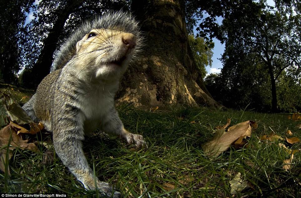 simons-wildlife-pics-04