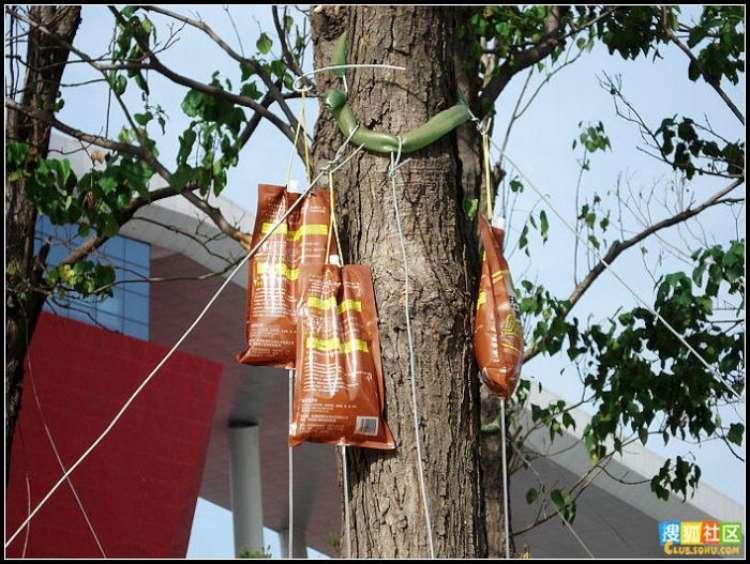 trees-feeding-03