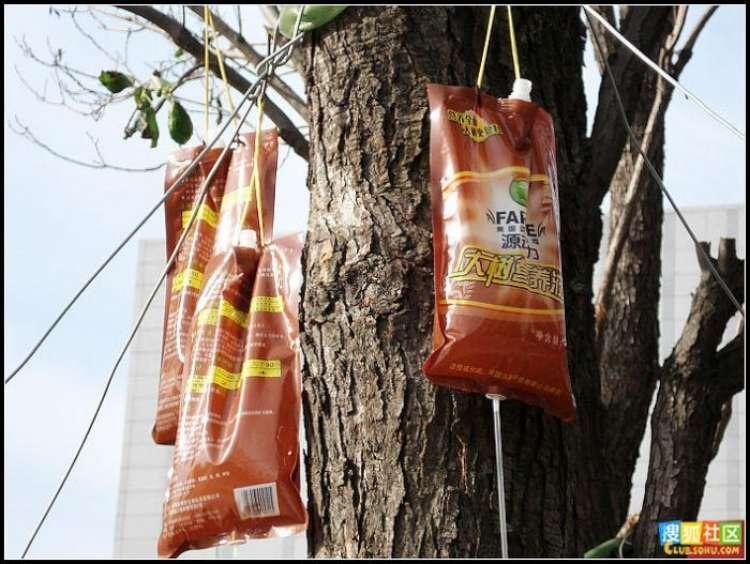 trees-feeding-04