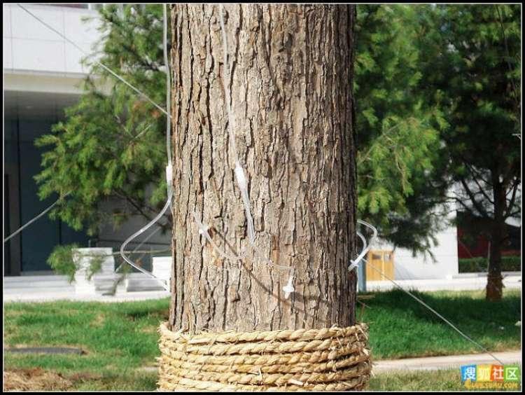 trees-feeding-05