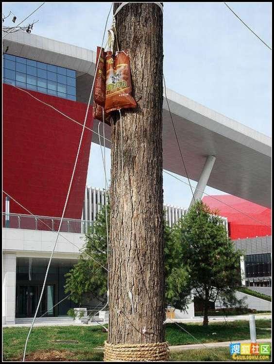 trees-feeding-06