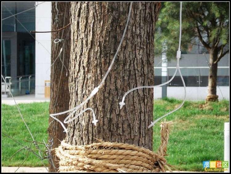 trees-feeding-08