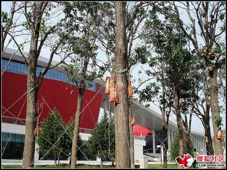 trees-feeding-09