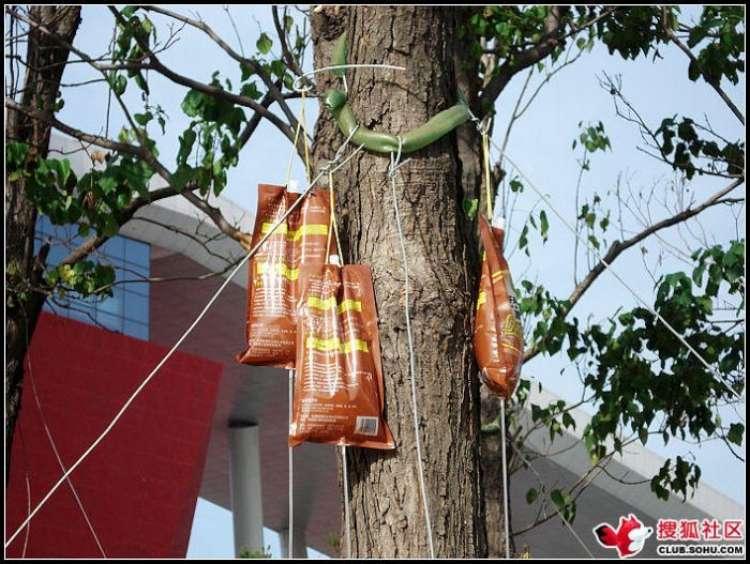 trees-feeding-10