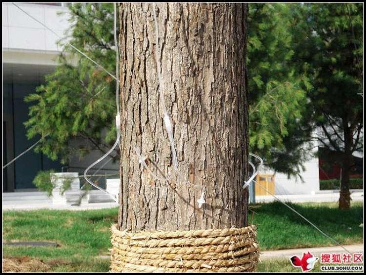 trees-feeding-11