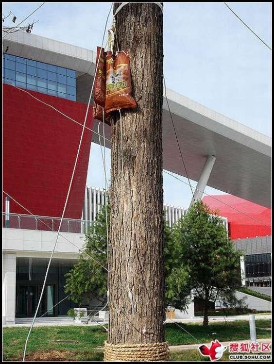trees-feeding-12